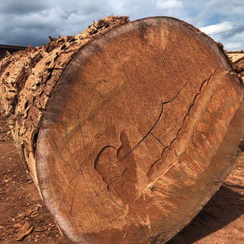 Logs5